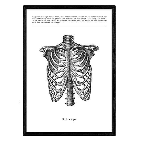 Poster van ribben. Anatomie van het menselijk lichaam. Spieren en botten. Films met menselijke lichaamsdelen. A4-formaat