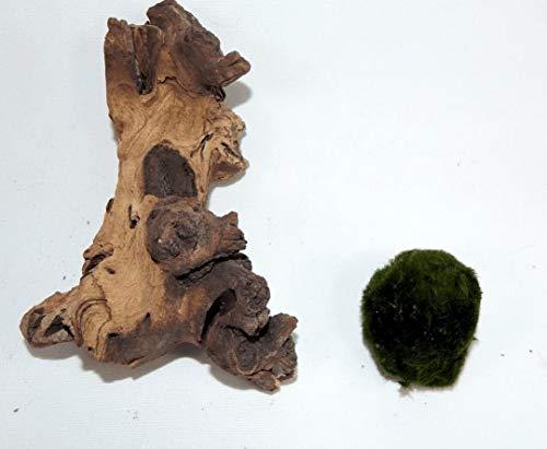 SAHAWA Wurzel, Mangrove, Mopani + Moss Ball Kostenlose Aquarium Terrarium Dekoration Ca. 12-15 cm