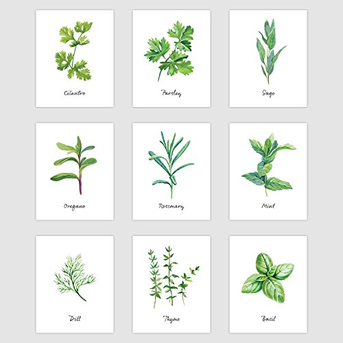 Palace Learning Kitchen Herb Botanical Prints - Wall Art Decor - Set of 9 Prints (8' x 10', Unframed Paper Cardstock)
