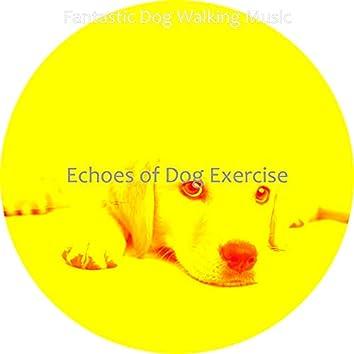 Echoes of Dog Exercise
