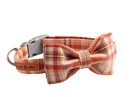 Lionet Paws Dog and Cat Collar with Bowtie Grid Collar