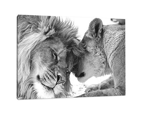 bestforhome - Leinwandbild Schönes bezauberndes kuschelndes Löwenpaar (Löwen) in Afrika in der Savanne! schwarz/weiß auf Leinwand, riesige Bilder fertig gerahmt mit Holzrahmen (120 x 80 cm)