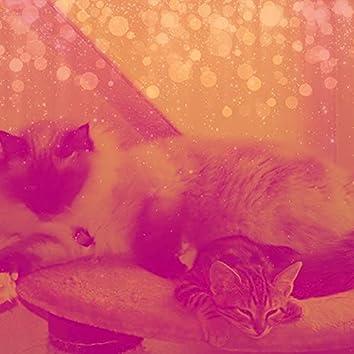 環境-眠っている猫