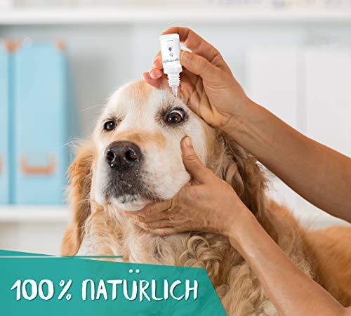 AUGENTROPFEN, 100 % natürlich, für Hunde / Katzen / Pferde / Kleintiere, 10 ml, alkoholfrei, - 4