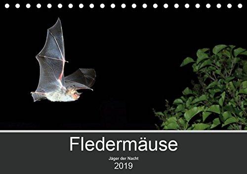 Fledermäuse - Jäger der Nacht (Tischkalender 2019 DIN A5 quer): Fotos unserer europäische Fledermäusen aus allen Jahreszeiten. (Monatskalender, 14 Seiten ) (CALVENDO Tiere)