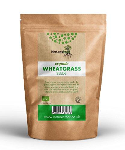 Natures Root Bio Weizengras Sprießen Samen 1kg - Superfood | Nicht GVO | Microgreen Sprouts | Gartenpflanzen | Weizen Gras Entsaften | Katzengras
