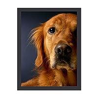 INOV ゴールデン リトリーバー犬 アートフレーム インテリアフレーム 新生活応援 かわいい おしゃれ アートパネル インテリア ギフト プレゼント 30x40cm