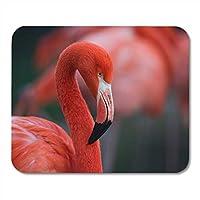 マウスパッド防傷ファッションピンクの野生のフラミンゴカラフルな美しい鳥の色動物相フラミンゴノートブック、デスクトップコンピューターマウスマット、オフィス用品のマウスパッド防傷ファッションを分離
