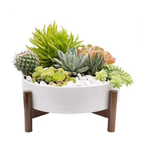 Joda 10 Inch Mid Century Round Succulent Planter with Stand, Succulent Pots with Drainage, Cactus Planter, Dining Table Centerpiece, Decorative Marble Pebbles Included (Plants NOT Included)