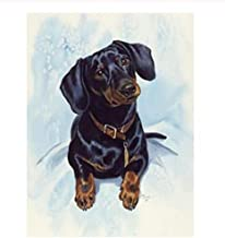DIY Oil Painting by Numbers, Paint by Number Kits Digital Oil Painting Canvas Wall Art Artwork Paintings Dog Dachshund Hom...