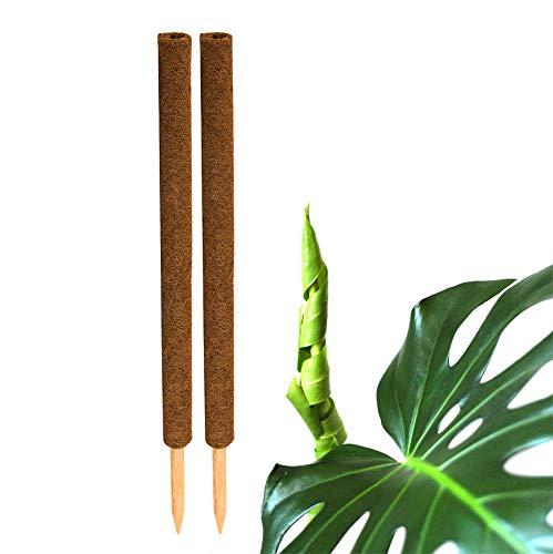 BigDean 2X Kokos Pflanzstab 80cm Rankstab Kokosfaserstab Kokosstab verlängerbar