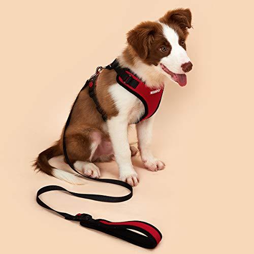 Mudinpet Hundegeschirr mit Leine ,hundegeschirr welpen kleine mittelgroße Hunde, wsicherheitsgeschirr Hund ausbruchsicher gepolstert verstellbar