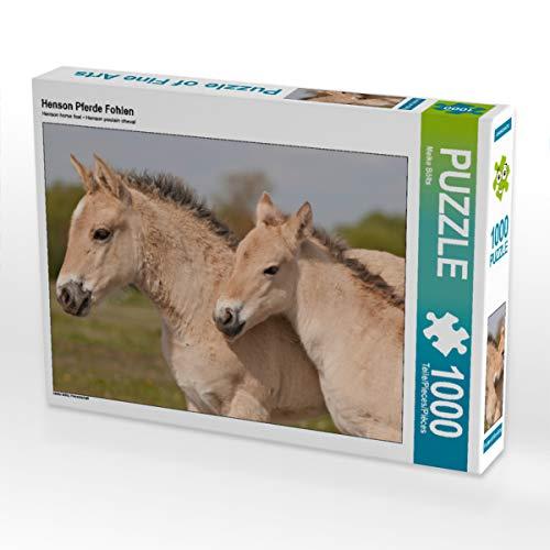 CALVENDO Puzzle Henson Pferde Fohlen 1000 Teile Lege-Größe 64 x 48 cm Foto-Puzzle Bild von Meike Bölts