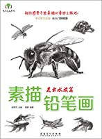 Art Ze art series sketch pencil drawing: the insect Aquarium(Chinese Edition)