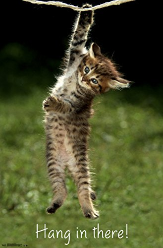 """Trends International Kitten Hang In There Wall Poster 22.375"""" x 34"""""""