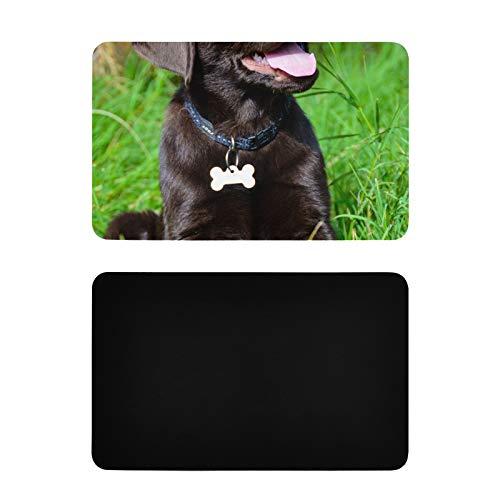 Magneti da cucina quadrati Magneti da frigorifero per cuccioli di labrador cioccolato Magneti da frigorifero decorativi in pvc personalizzati Accessori da cucina divertenti e divertenti 4x2,5 polli