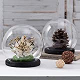 MyGift 6-inch Clear Glass Terrarium & Keepsake Display Globe Cloche with Black Stain Wood Base, Set of 2
