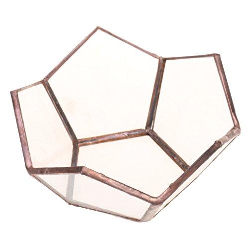 Fenteer Boîte Terrarium en Verre Transparent Maison Serre de Table pour Plante Micropaysage Bijoux Organisateur Décoration Fête