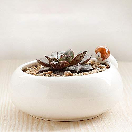 SHUTING2020 Maceta Decorativa Cerámicos de Uso doméstico suculentas Verdes Planta de Tiesto con el Agujero for Drenaje de la Sala de Oficina de Escritorio Bonsai Maceta de jardín