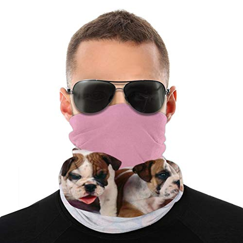 OUYouDeFangA Bulldogs - Diadema unisex multifunción de poliéster de secado rápido, suave, pañuelo para el cuello, bufanda, pañuelo para la cabeza mágica, bufanda para el cuello, polaina, para hombres y mujeres