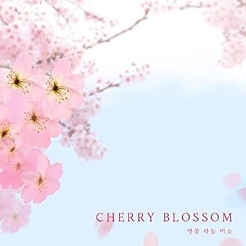 벚꽃 하늘 미소 Cherry Blossom
