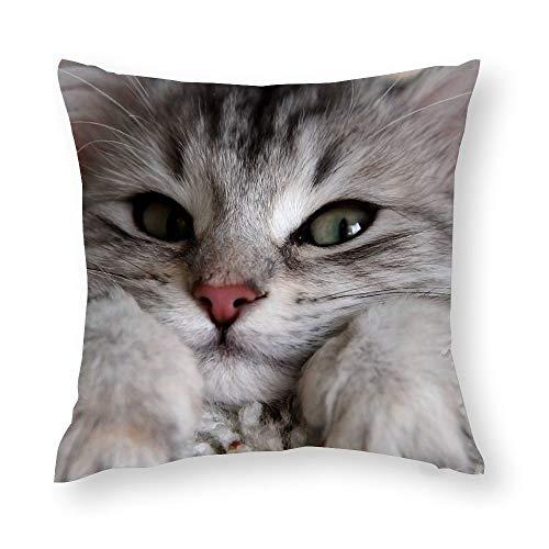 Funda de almohada decorativa de microfibra suave con diseño de gato con ojos verdes y huellas decorativas, 45 x 45 cm