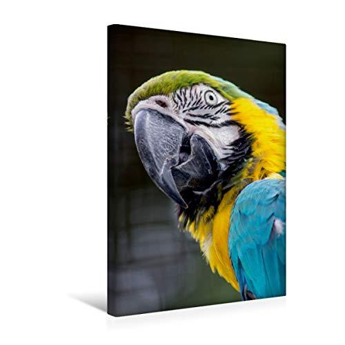 CALVENDO Premium Textil-Leinwand 30 cm x 45 cm hoch, Hallo? | Wandbild, Bild auf Keilrahmen, Fertigbild auf echter Leinwand, Leinwanddruck: Frecher Ara Tiere Tiere