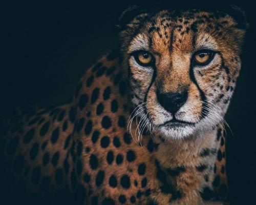 LFNSTXT 1000 pezzi di puzzle, puzzle a tema animale, puzzle per amanti degli animali, bellissimo ghepardo animale-74,9 x 50 cm
