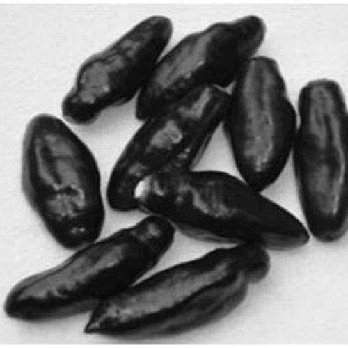 scharfe schwarze Chili 12 x Samen aus Portugal/seltene Sorte Massenträger 100% Natursamen