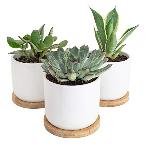 Sona Home Succulent Pots with Drainage, 4 inch Pots for Plants, Small Ceramic Pots, Succulent Planters with Bamboo Trays, Set of 3