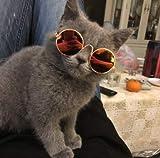 Haokaini Mascota Gato Perro Gafas Gafas de Sol Gafas de Sol Protección UV Gafas de Sol UV Gafas de Sol Gafas de Sol para Gato Perro