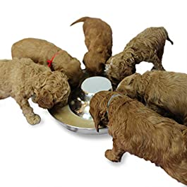 Pudiman Stainless Steel Puppy Dog Bowls, Pets Puppies Feeding Food and Water Weaning Bowls Dishes Feeder