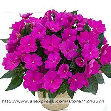 VISTARIC 13: Big Pots de fleurs jardinières, 20 types, 50 PCS/Lot, rose graines arc-en-Belle rose graines bonsaïs graines, 13 B4LT8H
