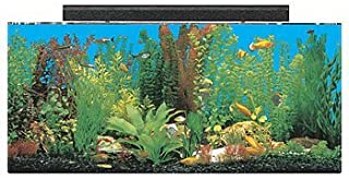 scratched fish tank glass