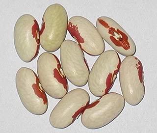 soldier bean seeds