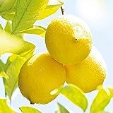 WELEDA Citrus Erfrischungsdusche, mit Zitronen Und Orangen Duft, 200ml - 4