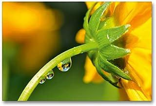 Lienzo de gran calidad, 90 cm x 60 cm, horizontal, diseño de flor amarilla con gotas de agua y espejos (CALVENDO natural)