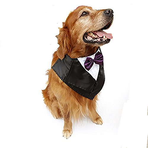 PETFAVORITES Large Dog Tuxedo Costume - Cat Wedding Bandana Collar with Bow Tie for Halloween - Golden Retriever Sheepdog Clothes Outfits Accessories  Adjustable and Handmade (Purple  22.5 to 26-Inch)