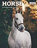 Horse Calendar 2022: Great 18-month Grid Calendar from Jul 2021 to Dec 2022 for all fans!!!