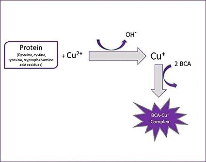 BCA Protein Assay Kit: Amazon.es: Industria, empresas y ciencia