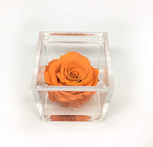 A 1056 Cubo Rosa Stabilizzata Arancione 5cm 5x5x5 profumata, Il Cubo con Una Vera e Propria Rosa Che Dura Anche più di 5 Anni, Premium-Rose