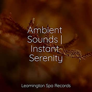 Ambient Sounds   Instant Serenity