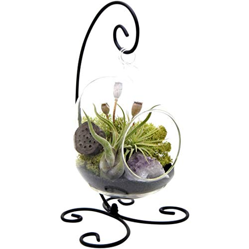 Bliss Gardens Air Plant Terrarium Kit with Amethyst - 6