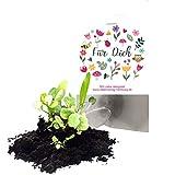 """10 bombas de semillas """"Für Dich"""" como regalo / flores / detalle / regalo / regalo / detalle / bombas de mar / bolsas de fiesta / bolsas de regalo / agradecimiento / bolas de semillas"""