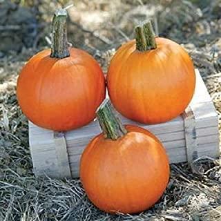 ANVIN Germination Seeds:25 Seeds Cannon Ball Pumpkin Garden Seeds