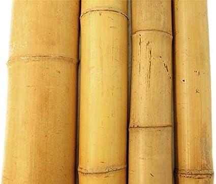 Bambus Stangen in vielen Gr/ö/ßen Bambusrohre /Ø 3-4 cm x L: 200 cm