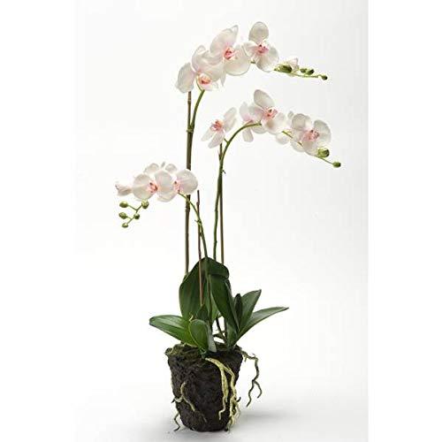 artplants.de Künstliche Phalaenopsis Orchidee Pabla im Erdballen, weiß - rosa, 70cm - hochwertige Kunstorchidee