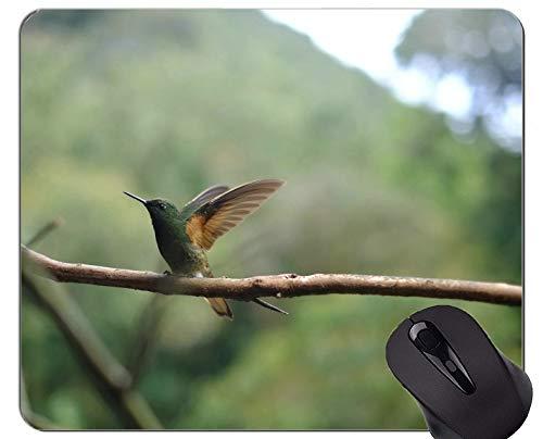 Kundengebundenes Rechteck-nicht Beleg-Gummi Mousepad, Naturtiervogel-Kolibri-Spiel Mauspads