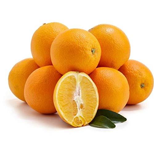 Frische Sizilianische Bio Orangen Navel 14kg (sehr süß). Unbehandelte und erntefrische Bio-Orangen aus Sizilien.