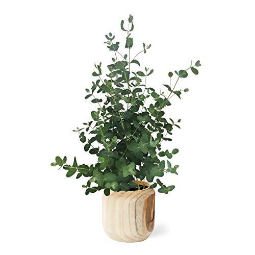 The Three Company Live Healthy Eucalyptus Wooden Pot